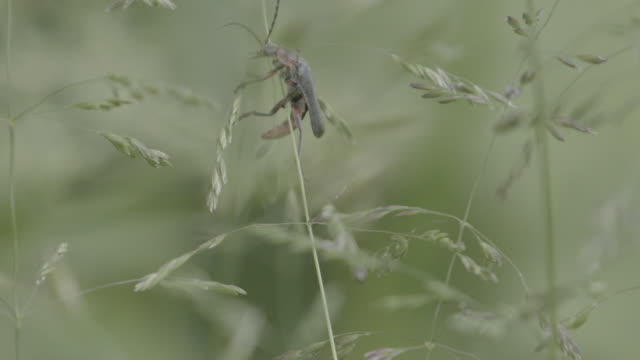 close up shot of a flying insect crawling on a blade of grass - styria filmów i materiałów b-roll