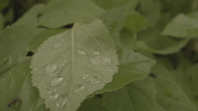 close up shot of an ant crawling across a wet leaf - styria filmów i materiałów b-roll