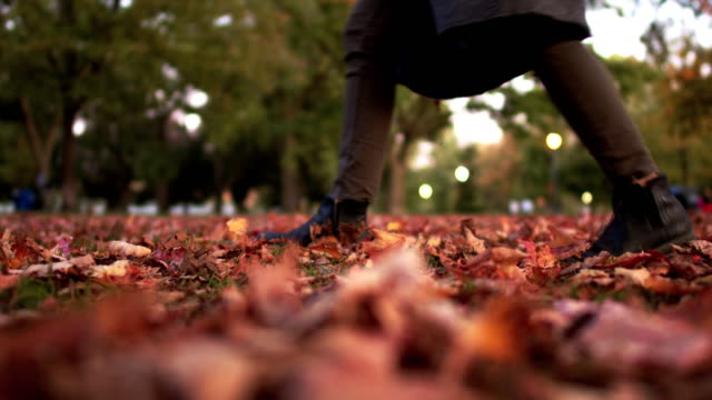 A close up shot of autumn leaves in a park