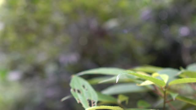close up shot of dark-blue, purple dragonfly perched on a green leaf plant - libellulidae video stock e b–roll