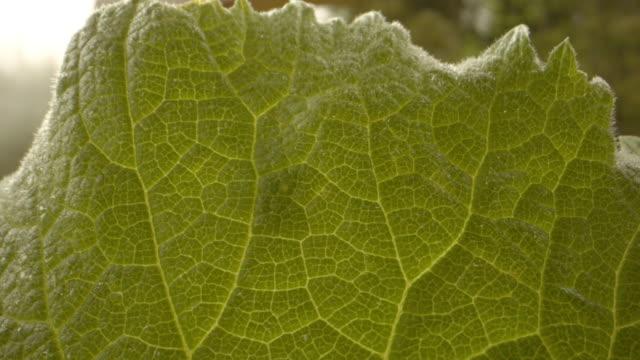 close up shot of green beetle crawling on a green leaf - styria filmów i materiałów b-roll
