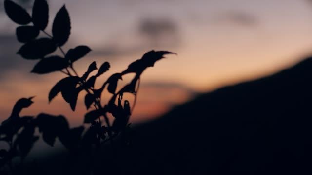 vidéos et rushes de fermez-vous vers le haut du projectile des feuilles se déplaçant au-dessus de l'arrière-plan d'un ciel radient. - botanique