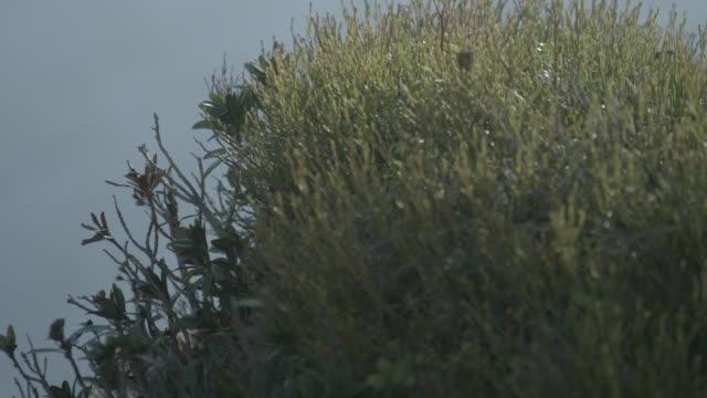 vidéos et rushes de fermez-vous vers le haut du projectile de la flore de montagne contre un ciel bleu - évasion du réel