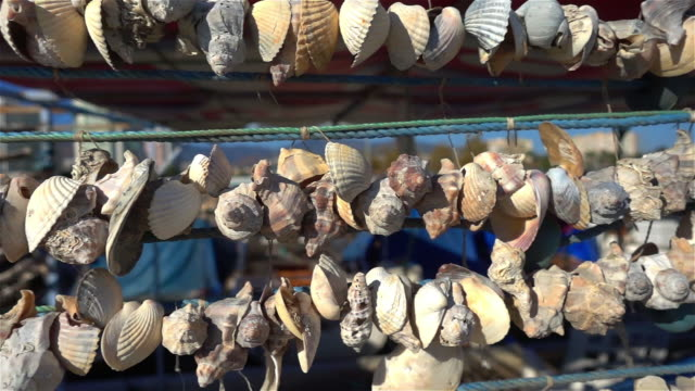 Close Up Shot Of Rope Hanged Shells