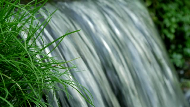 Bидео Close up shot of spring flowing through raw green of grass