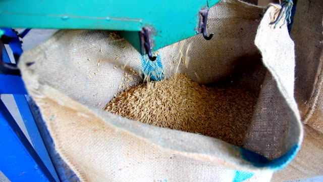 Close up shot-Rice from mill machine drop in a sack Close up shot-Rice from mill machine drop in a sack rice cereal plant stock videos & royalty-free footage