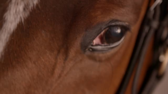 close up slow motion clip of the eye of a racehorse - imbracatura video stock e b–roll
