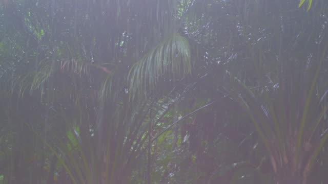 close up tropical rainstorm in the jungle against the backdrop of a green forest with a palm tree - monsone video stock e b–roll