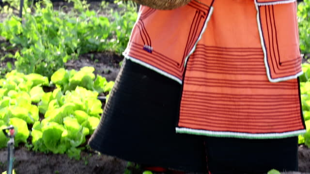 Close up video portrait of Xhosa African businesswoman farmer video