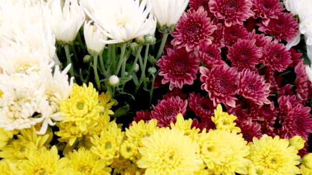 close up view of bunch of colorful flowers in the basket of some garden on the hill. - bouquet video stock e b–roll