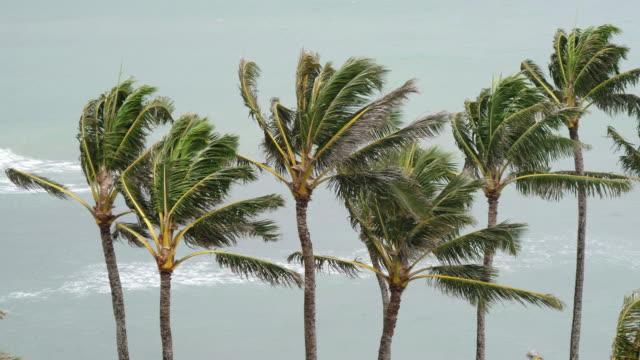 close up view of palm trees swaying in wind - palm tree filmów i materiałów b-roll