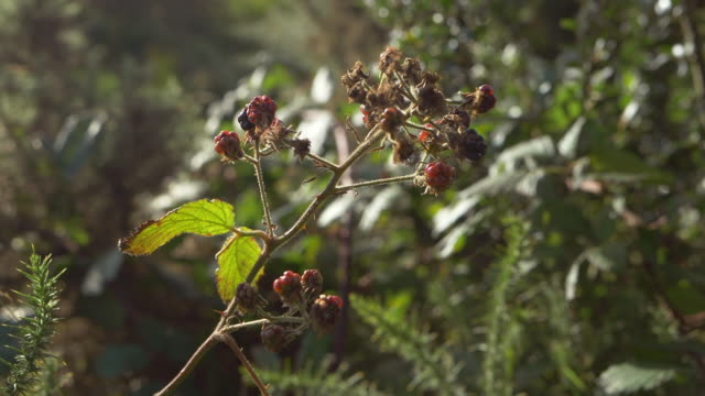 close up view of wild berries in the wind