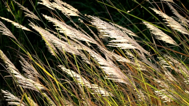 stockvideo's en b-roll-footage met close-up van witte bloem in het veld met de achtergrond van de zonsopgang. - fresh start yellow
