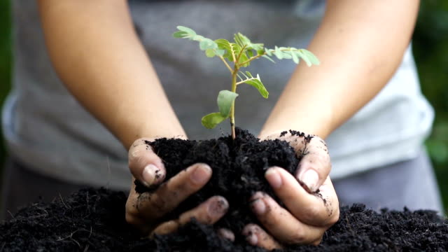 Close up. woman hand planting young tree. - vídeo