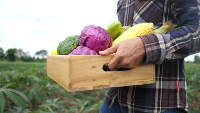 Close up young farmer is holding a box of organic vegetables - video