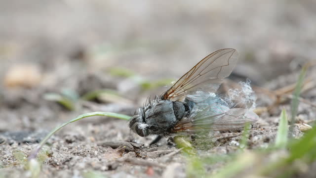 Closer look of the dead wasp on the ground