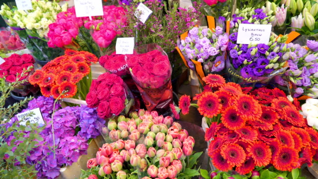 closer look of the fresh flowers for sale in amsterdam - дискаунтер стоковые видео и кадры b-roll