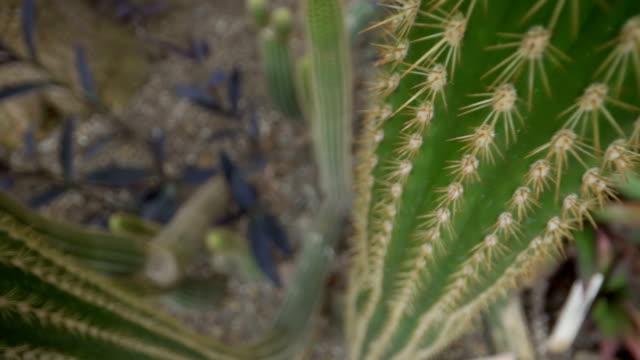緑のスパイキーサボテンの詳しい外観 - 尖っている点の映像素材/bロール