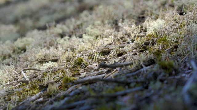 Closer look of the white moss on the tree trunk in Estonia