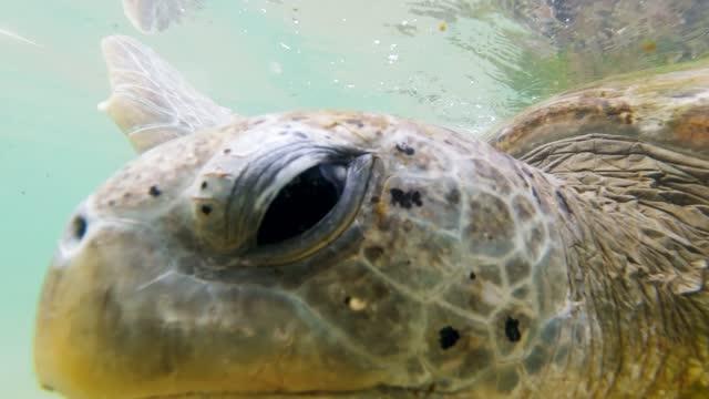 vidéos et rushes de vidéo de plan rapproché de 4k des yeux verts de tortue nageant dans l'océan - coquille et coquillage