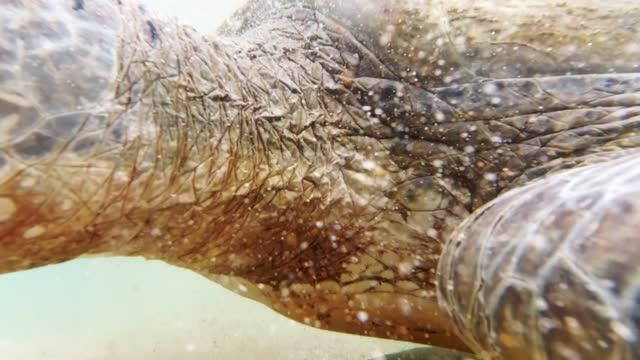 vidéos et rushes de plan rapproché vidéo de 4k de la tête de tortue nageant à côté du rivage d'océan au sri lanka - coquille et coquillage