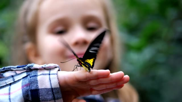 close-up. a butterfly flutters its wings on the hand of a little girl. 4k slow mo - butterfly stock videos & royalty-free footage