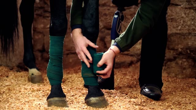 close-up, a man bandaging horse's leg. Horse legs are protected with bandages