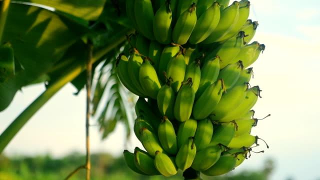 Close-Up at Banana