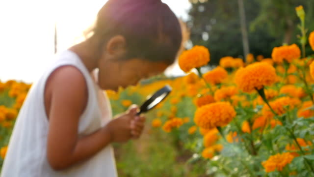 close-up beauty girl using magnifying glass in gold floral field. concept of self learning trips lifestyle in springtime. slowmotion video footage full hd 1920x1080. high speed camera shot 50 fps. - esploratore video stock e b–roll