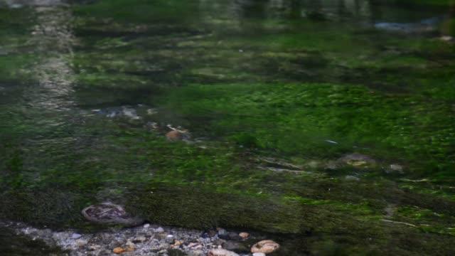 藻の上のクローズアップの澄んだ水流 - 清潔点の映像素材/bロール