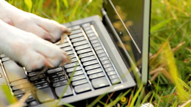 zbliżenie pies łapa korzystać z laptopa - łapa filmów i materiałów b-roll