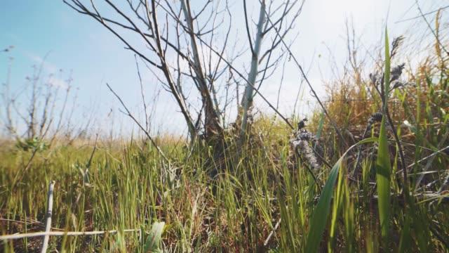 vídeos de stock, filmes e b-roll de close-up dolly tiro de grama verde no campo no dia ensolarado. fundo colorido da natureza - sem cultivo