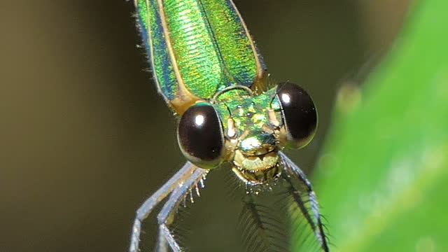 Close-up dragonfly flying in a tropical rainforest. video