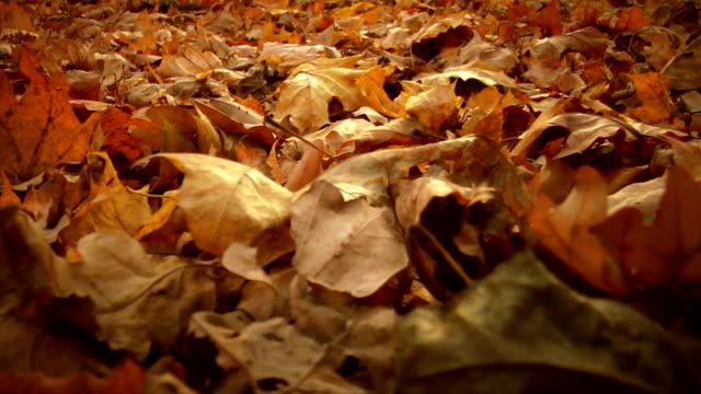 vidéos et rushes de gros plan dry leafs - couleur saturée