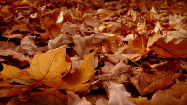 close-up di foglie di asciutto - colore saturo video stock e b–roll