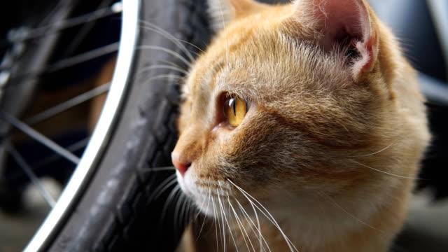 Closeup eye of brown cat Closeup eye of brown cat shorthair cat stock videos & royalty-free footage