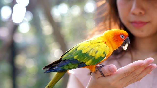 Close-up feeding Parrot