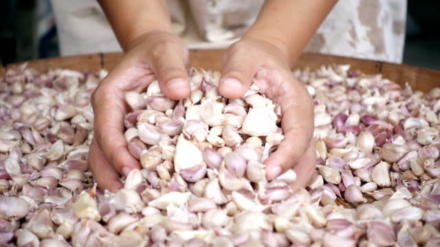 Close-up female hand holding colorful cleaned garlic, pouring garlic by hand. - video