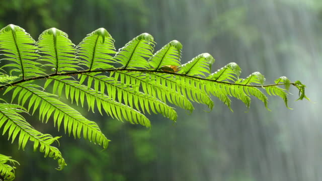Close-up fern with background water falling. video