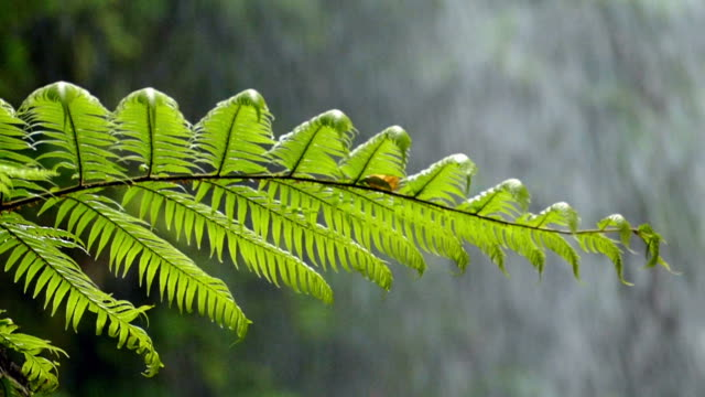 Close-up fern with background water falling.Slow Motion video