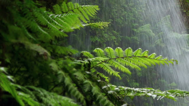 Close-up ferns with background water falling. video