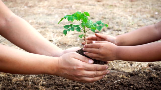 Close-up hand of asian female and little girl planting sapling in the land together. Ecology concept video