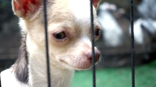 close-up-leiter der chihuahua hund im käfig - käfig stock-videos und b-roll-filmmaterial