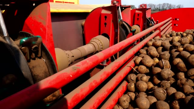 close-up, lots of potato tubers in tractor for planting. special mechanism picks up potatoes and puts them in soil , ground. automatic, machine potatoe planting video