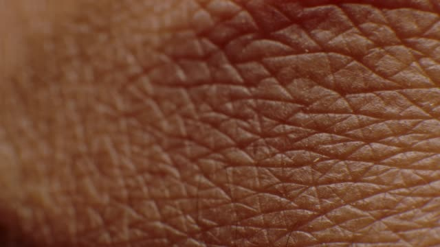 close-up macro of human skin - pelle video stock e b–roll