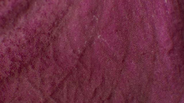 Close-up Macro of Pink Magenta Orchid Petal