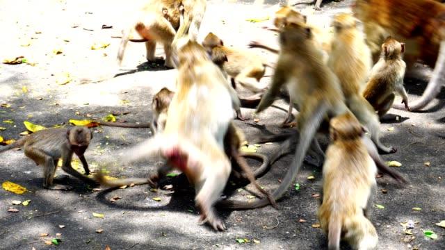 CloseUp Monkeys In Nature video