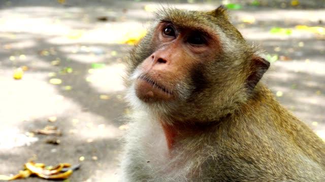 CloseUp Monkeys In Nature