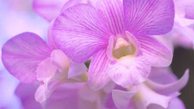 nahaufnahme natur blume im naturwind animieren. - orchidee stock-videos und b-roll-filmmaterial