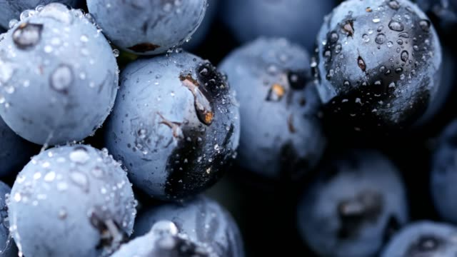vídeos de stock e filmes b-roll de close-up of a berries of blue grape after the rain - grapes